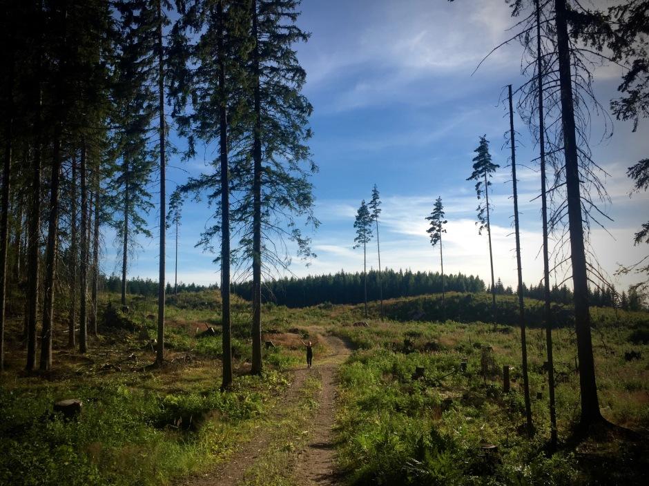 Metsäkävely ja villivadelmat.